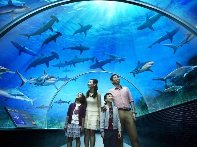 The World's Largest Aquarium at Resorts World Sentosa in Singapore will be home to 100,000 marine animals of over 800 species in 45 million litres of water