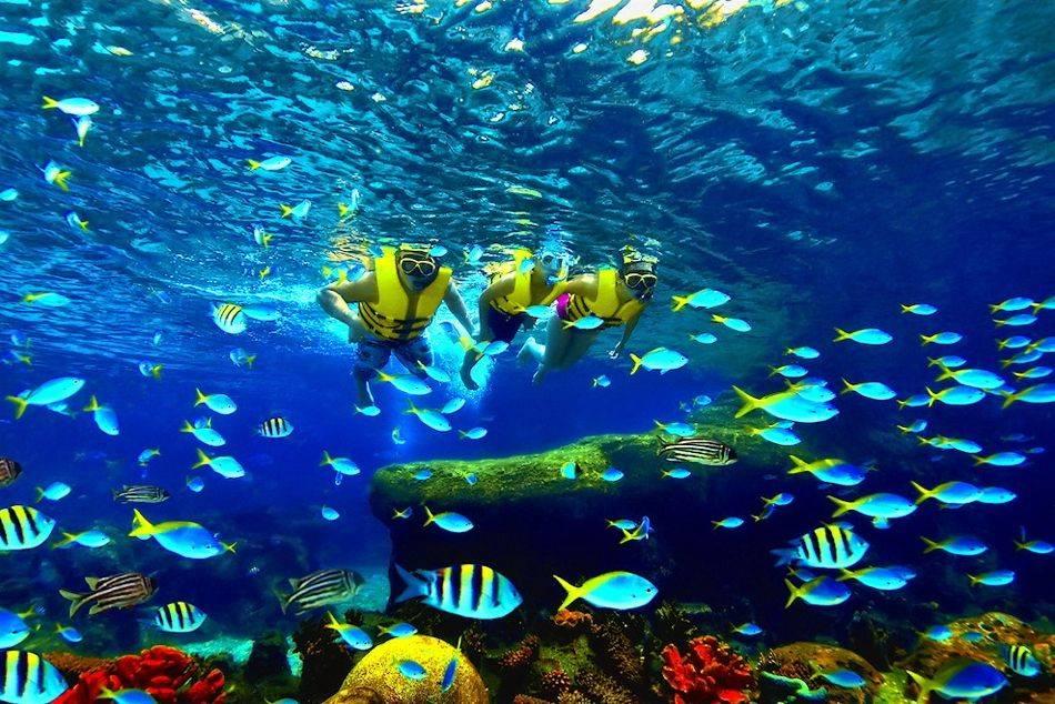 World S Largest Oceanarium Opens At Resorts World Sentosa
