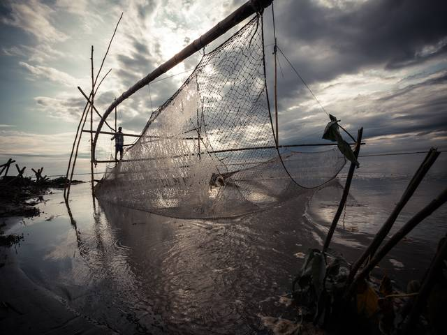 Dulen Mili is fishing with a traditional net near Modarguri Village. The net is oriented to catch fish going upstream. Two families own the net: Mili fishes in the morning, while Mungal Singh Noro takes his turn in the evening. Each gets about 5-10 kg/day ($15-30)
